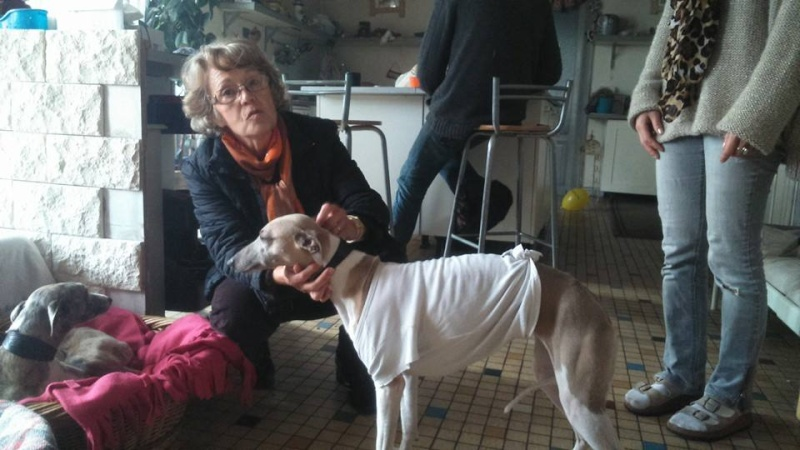 2 FEMELLES WHIPPETS ET 1 MALE A L ADOPTION Adoptes  - Page 2 Brindi15