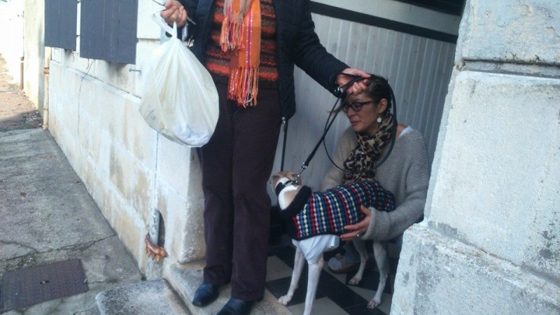 2 FEMELLES WHIPPETS ET 1 MALE A L ADOPTION Adoptes  - Page 2 Brindi18