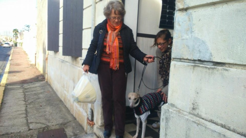 2 FEMELLES WHIPPETS ET 1 MALE A L ADOPTION Adoptes  - Page 2 Brindi19