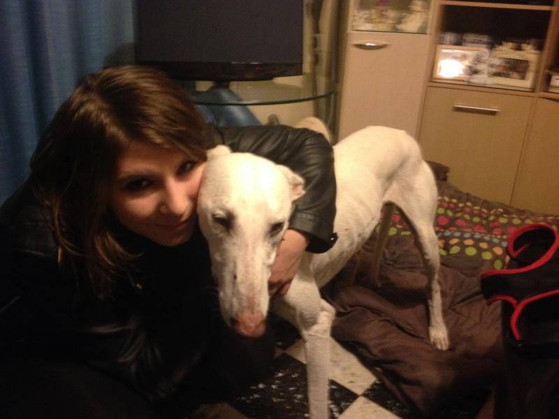Fandy grand galgo blanc à l'adoption Scooby France Adopté   Fandy_13