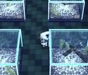 Animal Crossing Ancrgc22