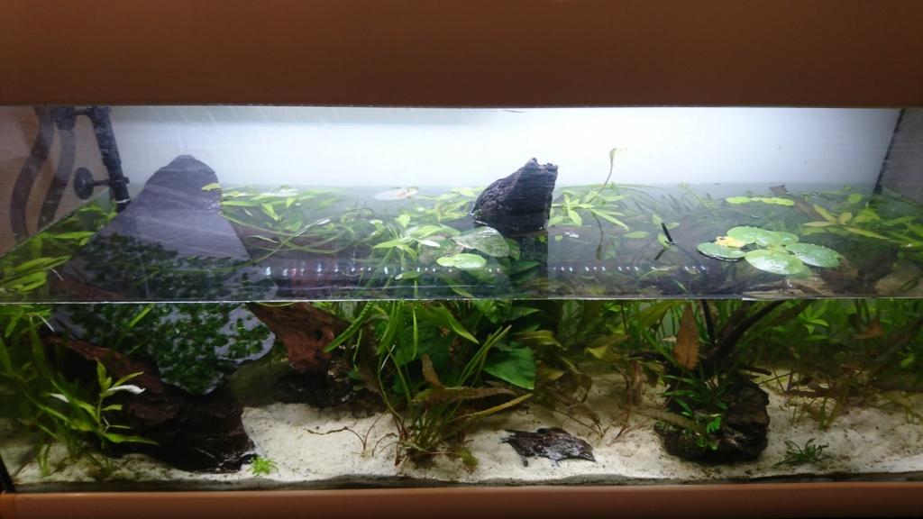 Aquarium pour Tylototriton shanorum Dsc_0010
