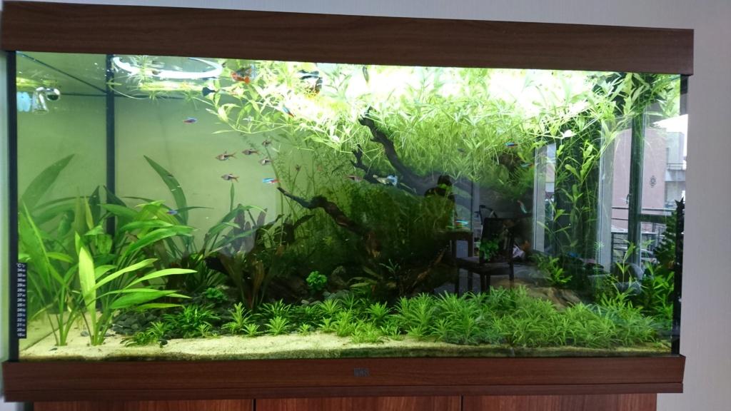 Aquarium pour Tylototriton shanorum Dsc_0011