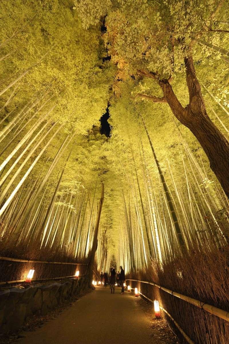 Kyoto - Japon : l'étonnante fête des lumières d'Arashiyama 510