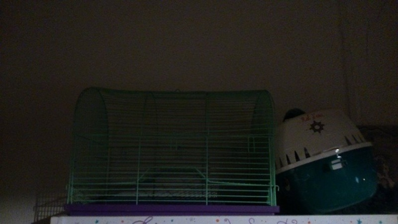 Vends cage faîte maison pour 2 rats ! 10300310