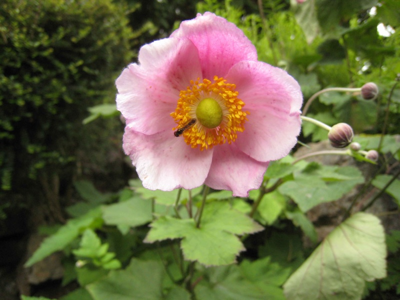 Japanese Garden - prox. Dublin (Irlande) Japane15