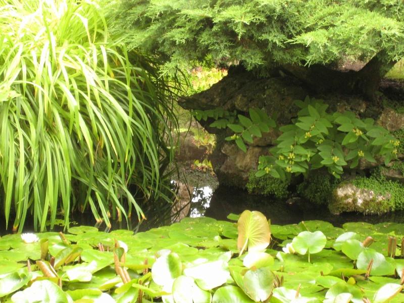 Japanese Garden - prox. Dublin (Irlande) Japane21