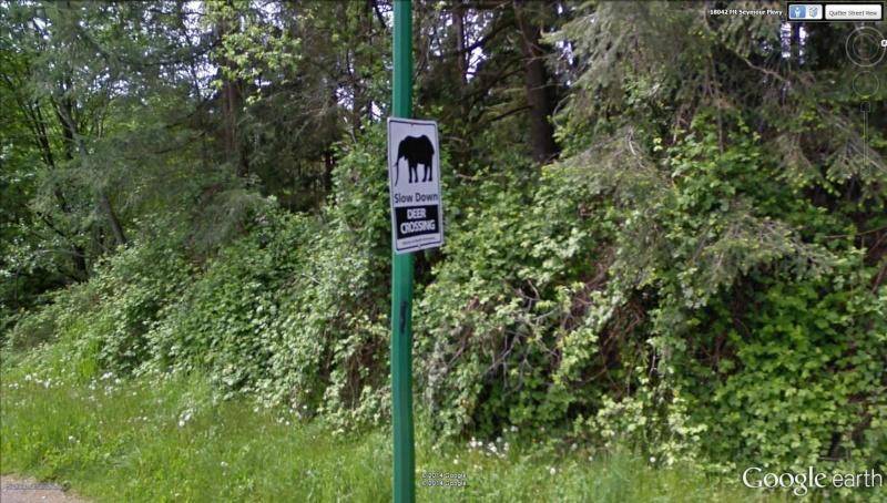 STREET VIEW : Panneau éléphant Seymour Creek Canada Slow_d10