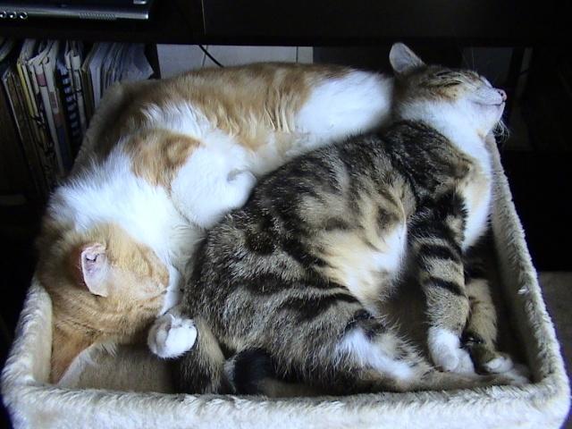 DOUAI 59 Trouvé chaton roux et blanc Arbrea16