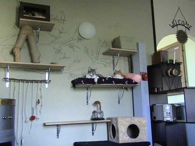 DOUAI 59 Trouvé chaton roux et blanc Arbrea18
