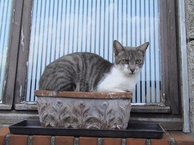 DOUAI 59 Trouvé chaton roux et blanc Arbrea19