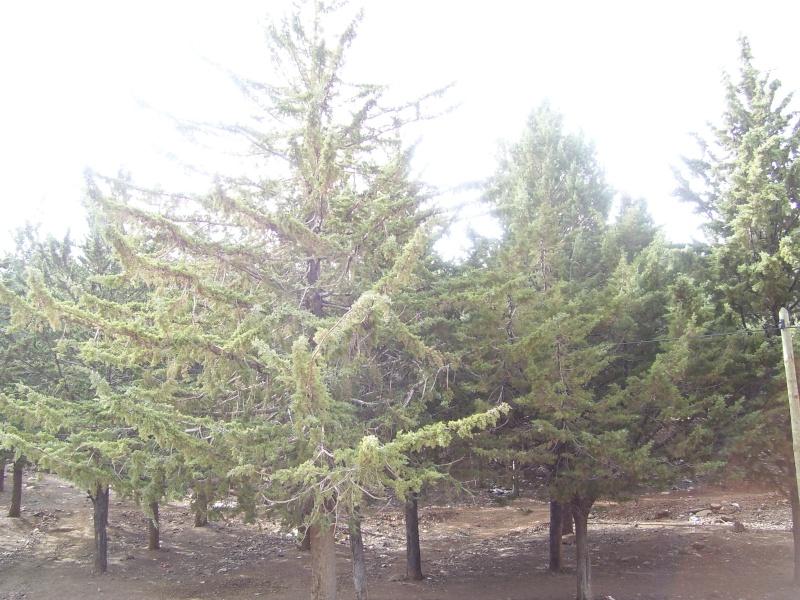 صور من إقليم أزيلال 2110