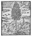 MONNAIES DE LEGENDES (EMBLEMISTE) - Page 29 2_cous11