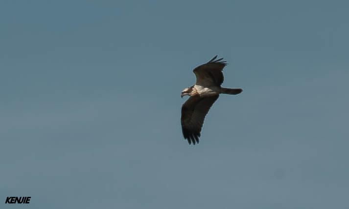 mon abc des oiseaux - Page 3 355_ba10