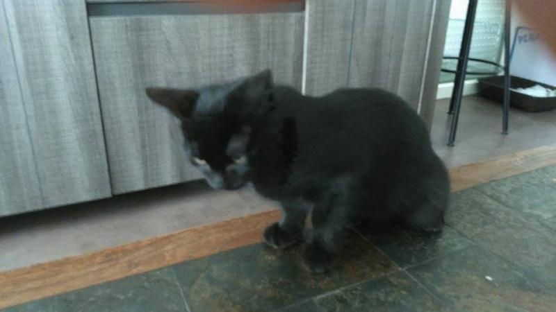 Jezzy, mâle, 28.08.201, noir 313