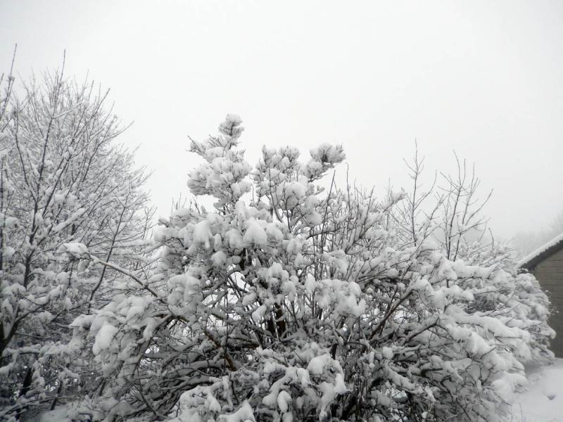 ÇA Y EST !!! L'hiver est là ! Dscn7410