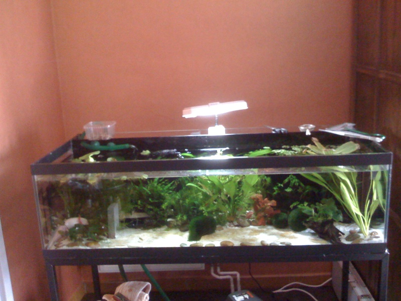 Cohabitation Axolotl 08310