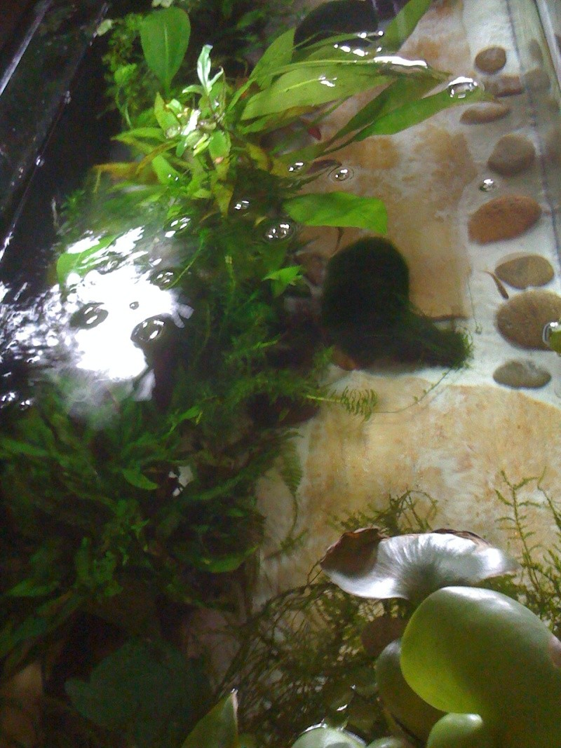 Cohabitation Axolotl 08510