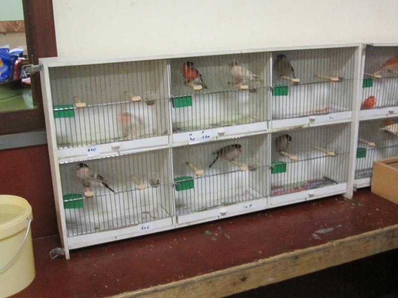 bourses d'oiseaux a flemalle Trix_011