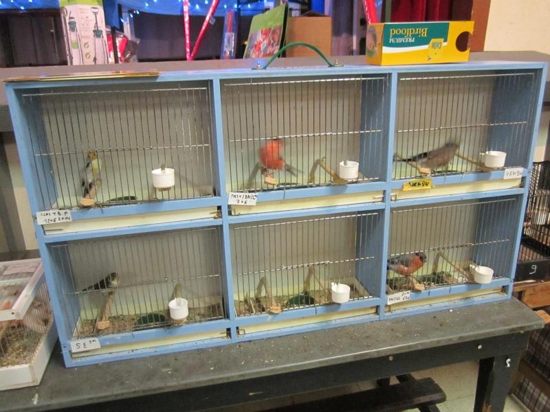 bourses d'oiseaux a flemalle Trix_012