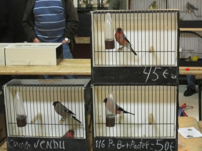 bourses d'oiseaux a flemalle Trix_013