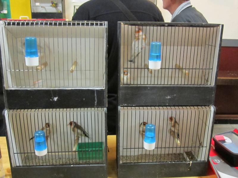 bourses d'oiseaux a flemalle Trix_014