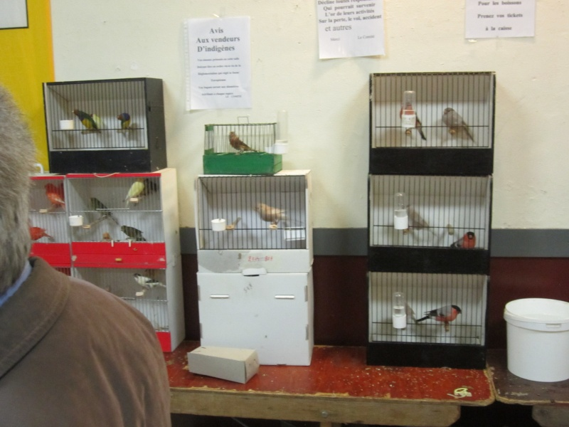 bourses d'oiseaux a flemalle Trix_015