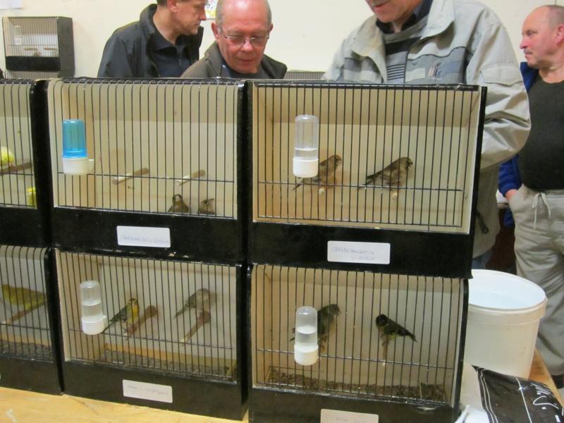 bourses d'oiseaux a flemalle Trix_016