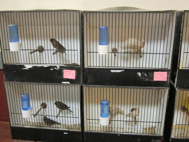 bourses d'oiseaux a flemalle Trix_017