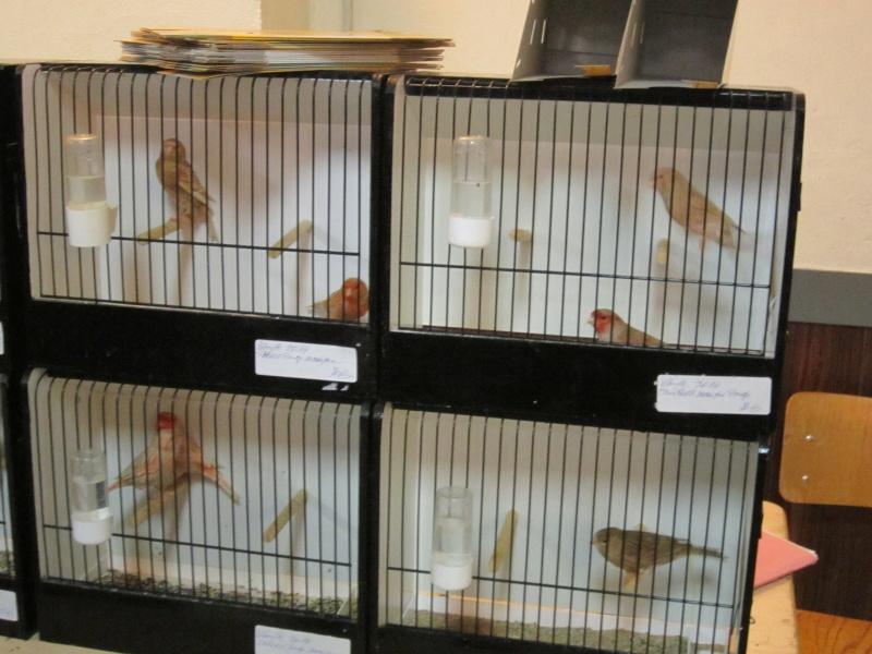 bourses d'oiseaux a flemalle Trix_019