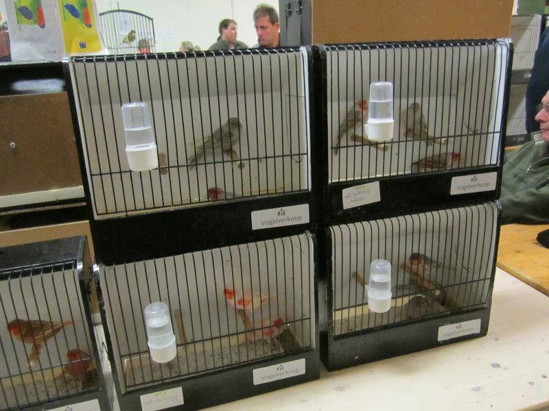 bourses d'oiseaux a flemalle Trix_021