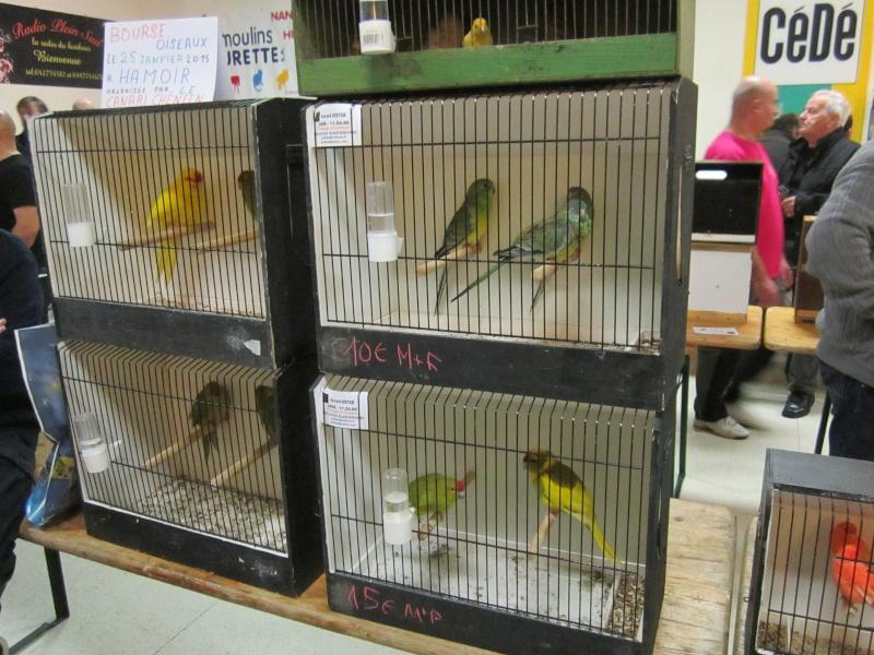 bourses d'oiseaux a flemalle Trix_023