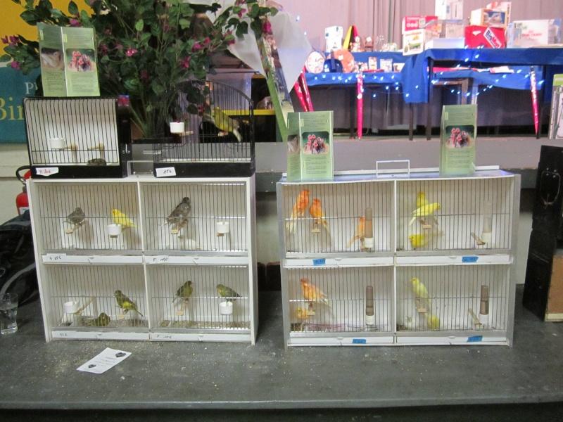 bourses d'oiseaux a flemalle Trix_025