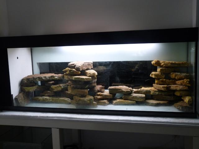 Un aquarium sans substrat nutritif  P1040813