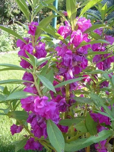 Petit quizz des plantes - Page 4 24503810