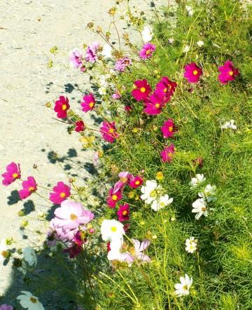 Petit quizz des plantes Bbb10