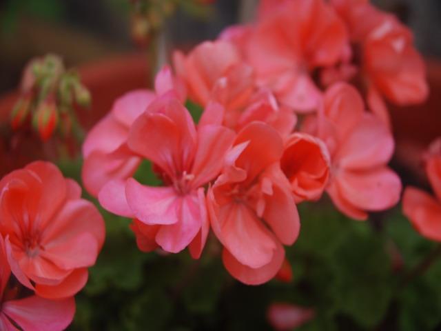 Agosto en flor - Página 3 Dsc_4822