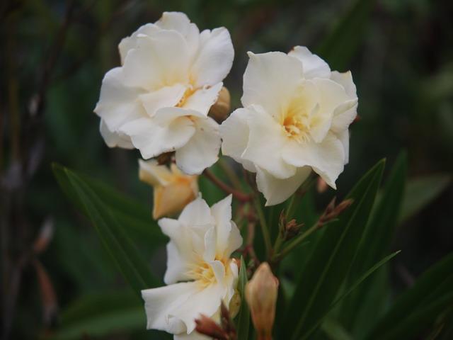 Agosto en flor - Página 3 Dsc_4823