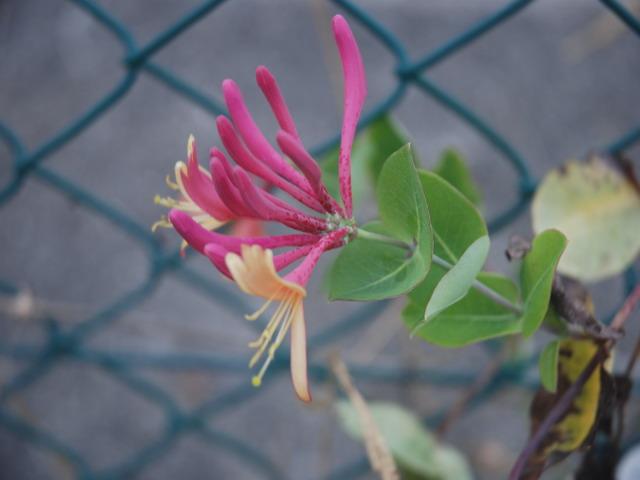 Agosto en flor - Página 3 Dsc_4826