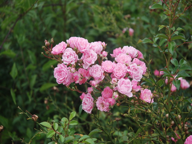 Agosto en flor - Página 3 Dsc_4828