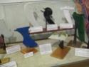 SURF MUSEUM 24970610