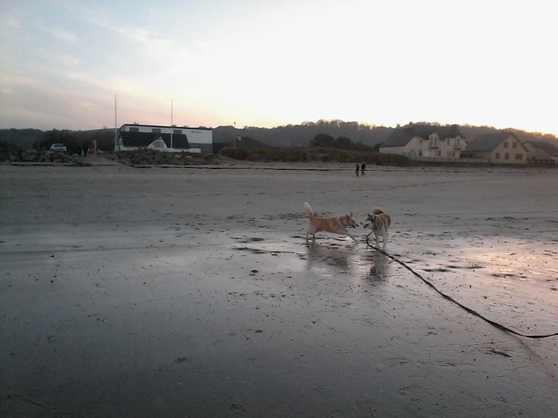 Kerouq, Sibérien Husky, 4 Ans et veut vivre sa vie. Dept 14.ADOPTE - Page 2 Img_2011