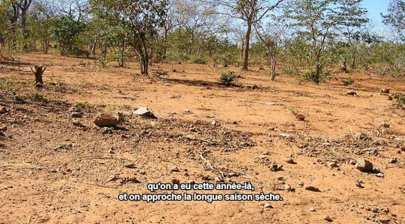 La terre qui nourrit nos chevaux Captur17