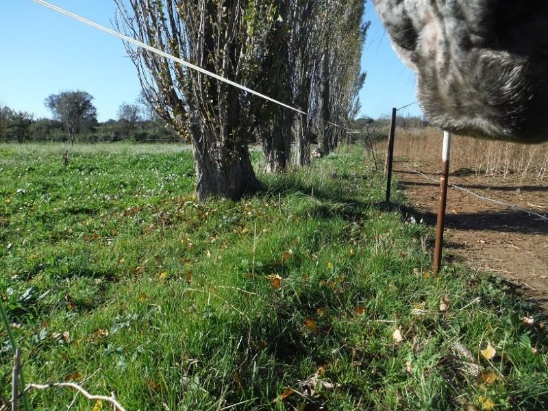 La terre qui nourrit nos chevaux Nov20110
