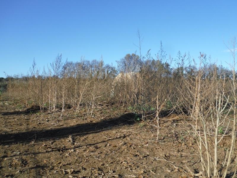 La terre qui nourrit nos chevaux Nov20111
