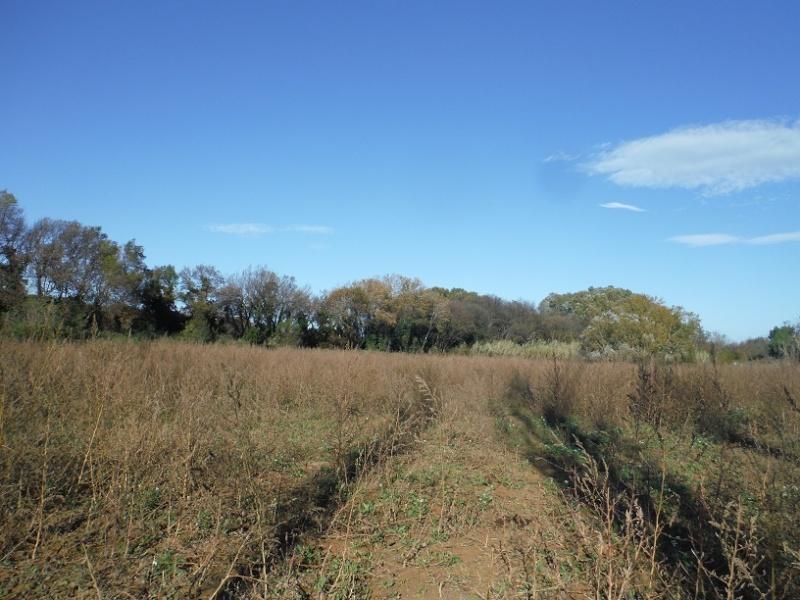 La terre qui nourrit nos chevaux Nov20112