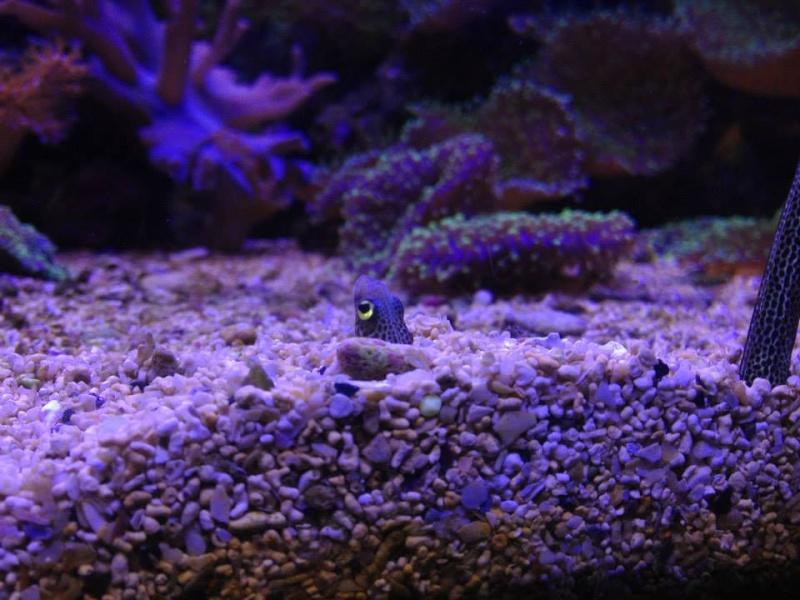 L'aquarium du Cap d'Agde (34) 10107710