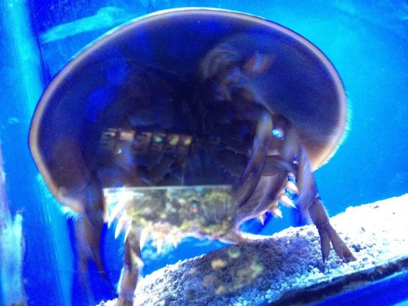 L'aquarium du Cap d'Agde (34) 10133010