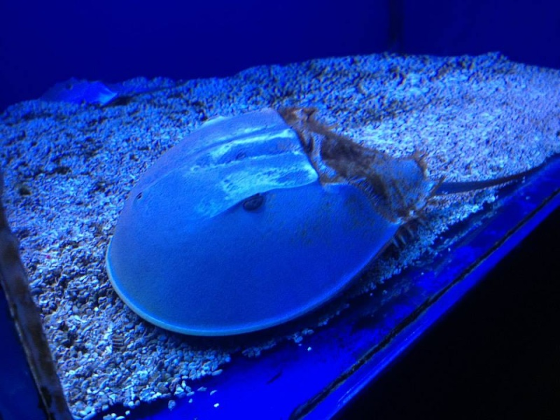 L'aquarium du Cap d'Agde (34) 10138510