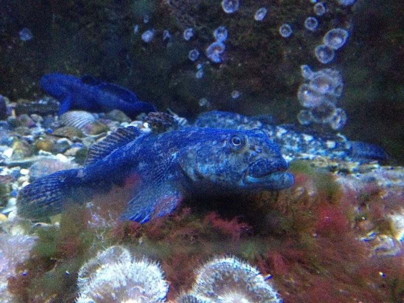 L'aquarium du Cap d'Agde (34) 10445910